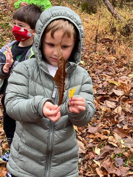 Morah - one leaf is bigger than the other - that is a comparison